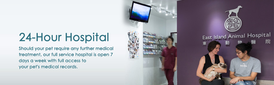 hk island 24 hour hospital   veterinary services in hong